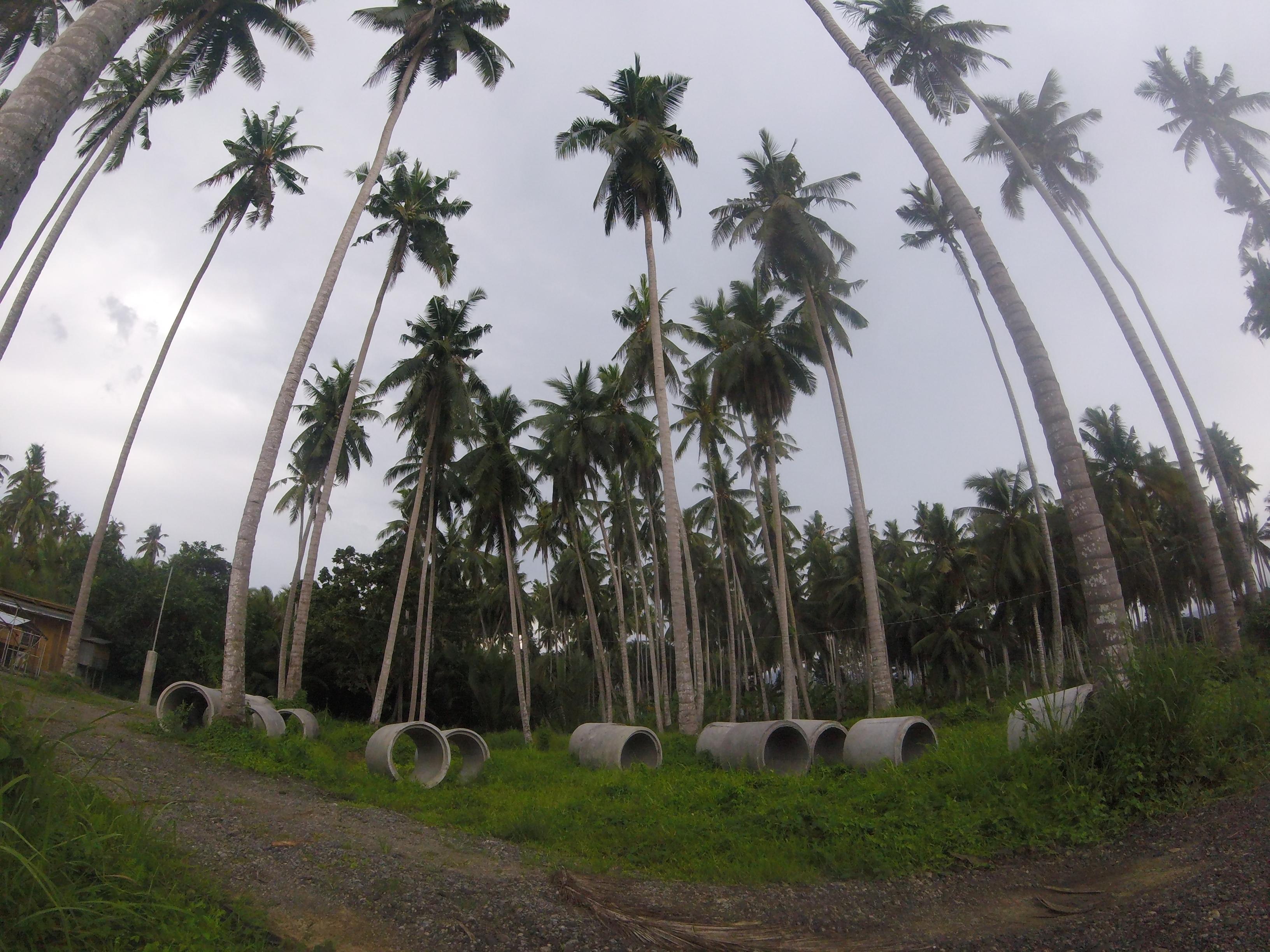 Virgin Coconut Philippines